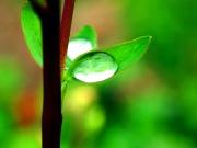 best-dew-nature-wallpaper-images-8716