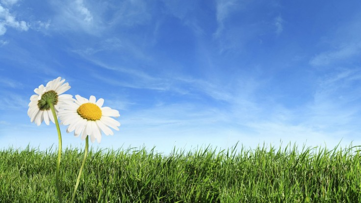 nature-wallpapers-high-resolution-spring-blue-sky-and-green-grass
