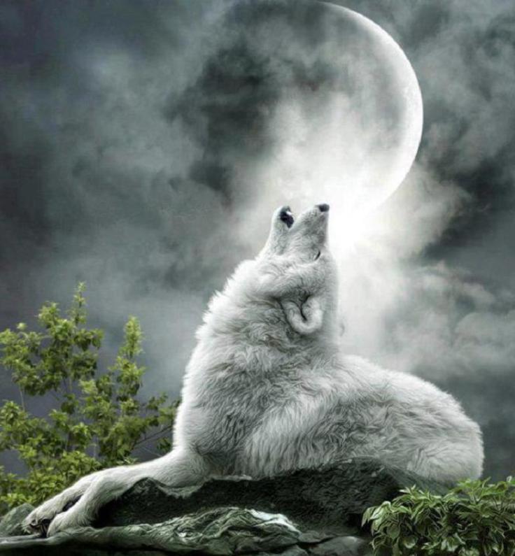 she wolf.jpg
